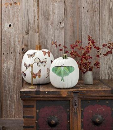 my-favorite-unique-pumpkin-decorating-ideas-L-LJa48q