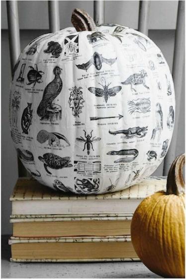 Pumpkin-Text